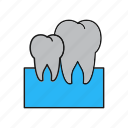anatomy, medical, tooth icon