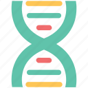dna, dna chain, genetic information, molecule, nucleic acid