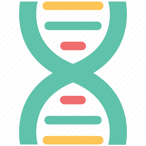 Dna, dna chain, genetic information, molecule, nucleic acid icon - Download on Iconfinder