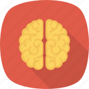 brain, learning, think icon icon