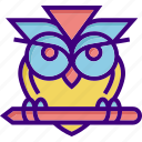 college, education, education owl, owl, school, science, wisdom icon