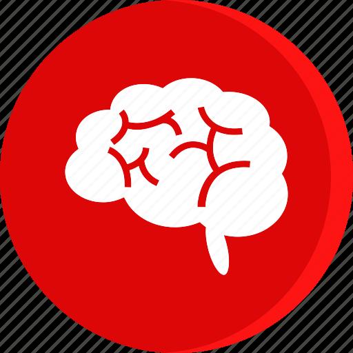 brain, education, human, school, schooling, science, study icon