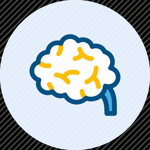 brain, education, idea, smart icon