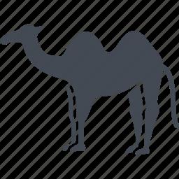animal, camel, egipt, hump icon