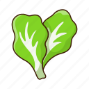 healthy, vegetarian, cooking, cabbage, vegetable, organic icon