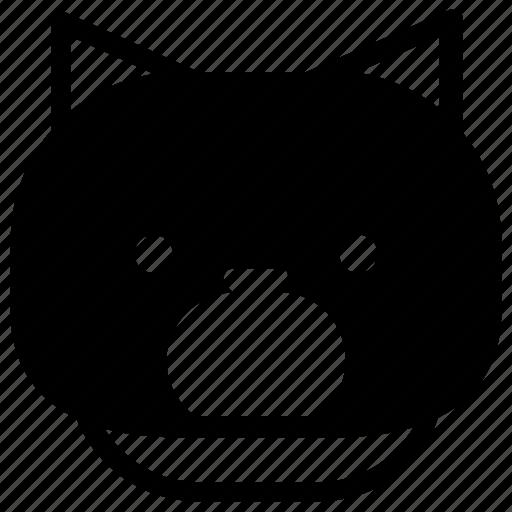 cat, emoticon, shock icon
