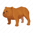 animal, breed, bulldog, dog, english icon