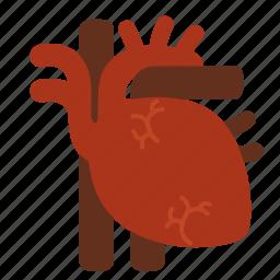 anatomy, cardiology, cardiovascular, core, entrail, heart, organ icon