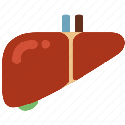 anatomy, detoxification, entrail, healthy, hepatology, liver, organ icon