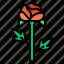 blossom, flower, plant, rose, vegetation