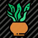 botanical, decorative, indoor, plant, tree