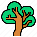 forest, jungle, tree, vegetation, wild