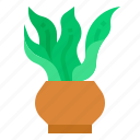 decorative, indoor, plant, botanical, tree icon