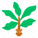 tree, decorative, indoor, botanical, vegetation icon