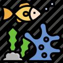 sea, life, coral, fish, aquarium, aquatic, animal