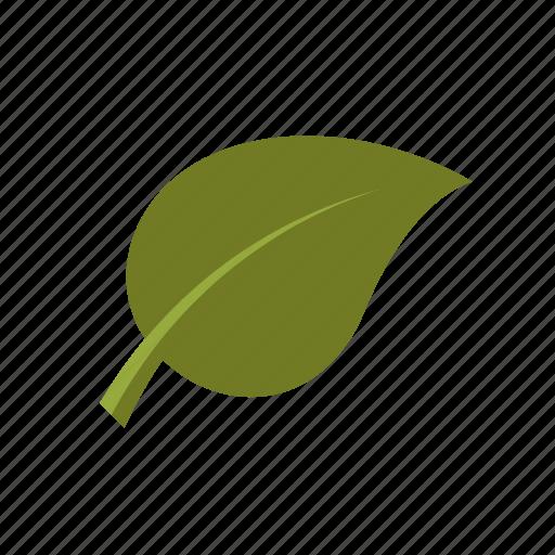 ecologic, environment, leaf, nature, plant icon