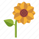 bloom, blossom, ecology, environment, nature, plant, sunflower