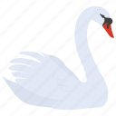 ballet, beautiful, boat, graceful, lake, swan, ugly duckling