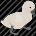 andersen, animal, baby, chick, duck, duckling, ugly