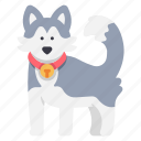 animal, canine, dog, friend, husky, pet, siberian icon
