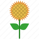 farm, farmland, field, flower, garden, nature, sunflower icon