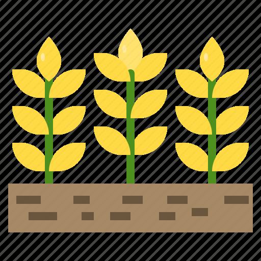 agriculture, barley, farm, farming, plant icon