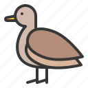 animal, brown teal, duck, farm, farming, poultry, teal icon