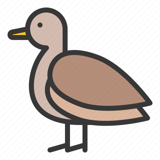 Farm, farming, animal, teal, poultry, brown teal, duck icon