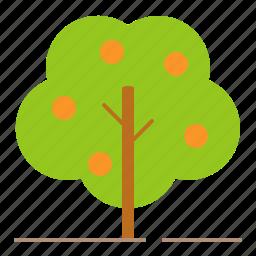 farm, farming, fruit, orange tree, tree icon
