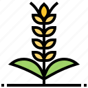 agriculture, barley, farming, harvest, plant icon