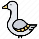 animal, bird, duck, goose, mallard icon