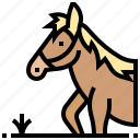 animal, farm, horse, jockey, mammal icon