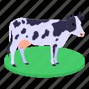 cow, cattle, farm animal, animal, domestic animal