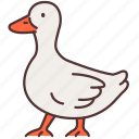 agriculture, animal, duck, farming, gardening, milk