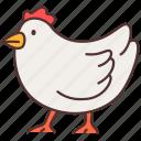 agriculture, animal, chicken, farming, gardening, hen