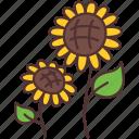 agriculture, farm, farming, flower, gardening, sun icon