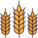 agriculture, farming, food, gardening, leaves, rice, wheat
