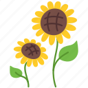 agriculture, farm, farming, flower, gardening, sun