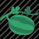 agriculture, farm, farming, fruit, gardening, organic, watermelon icon