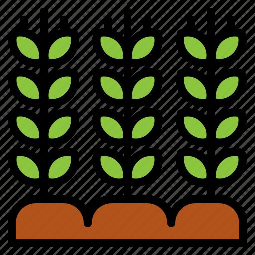 farm, farming, garden, gardening, grain, wheat icon