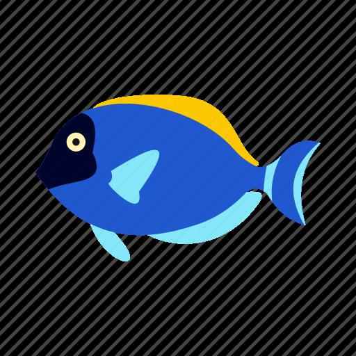 animal, fish, sea, surgeon, tropical, underwater, water icon