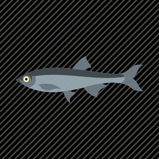 animal, herring, ocean, sea, tropical, underwater, water icon