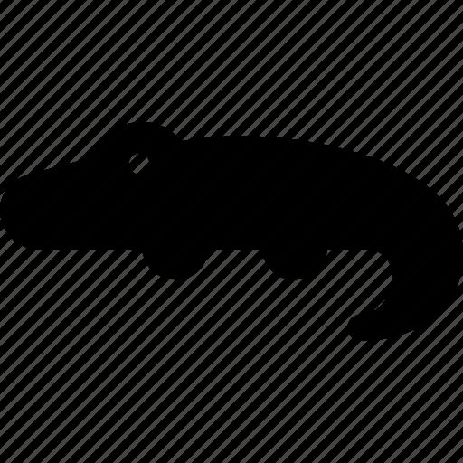 alligator, caiman, crocodile, gharial, nile icon