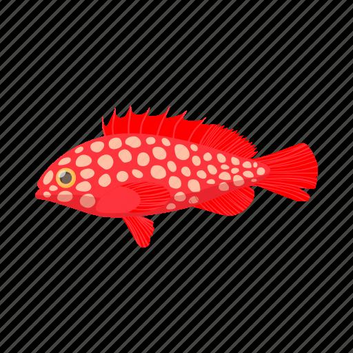 cartoon, fish, fishing, hemichromis, sea, trout, water icon
