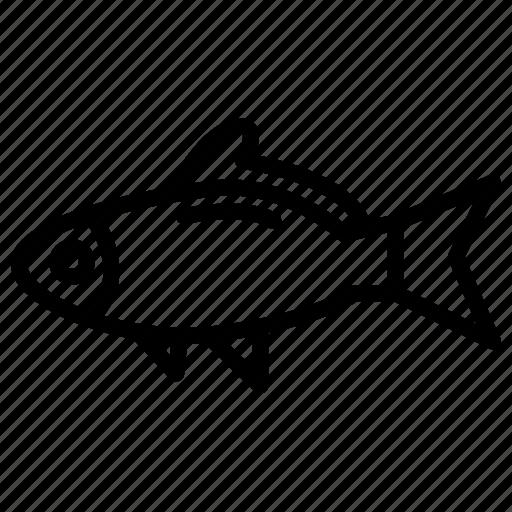 adventure, fish, fisherman, fishing, nature, water icon