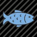 animal, catch, fish, fishing, food, salmon, seafood