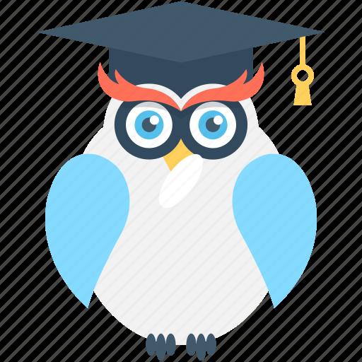 bird, knowledge, owl, owl sage, wisdom icon