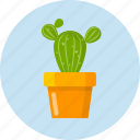 cactus, decoration, develop, plan, tree, work icon
