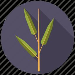 bamboo, botany, leaf, nature, plant, tree icon