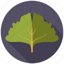 botany, ginkgo, leaf, nature, plant, tree icon
